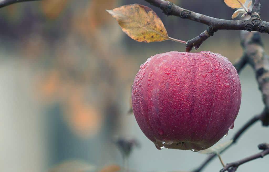 Offer low hanging fruit
