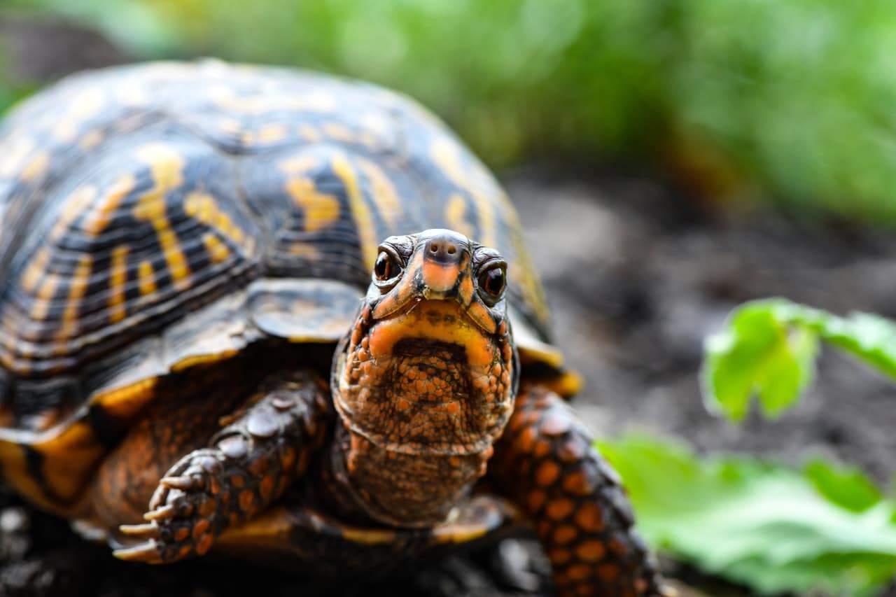 amphibian-animal-animal-photography-2613148